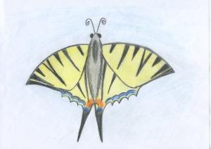 Rumbach Magdolna a fecskefarkú lepke